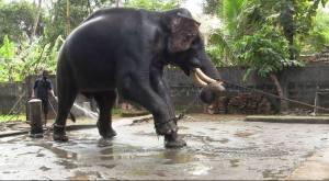 elephant in shower